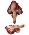 Afgehakte bloederige penis