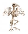 Kraai skelet 32 cm